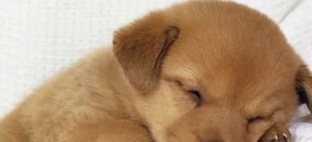 Il Cane Disturbadue Cacciatori Lo Massacrano A Bastonate Amici